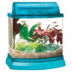 : Betta fish tanks and plus what do i need for a betta fish tank and plus fish tank for siamese fighting fish
