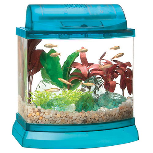 Betta fish tanks and plus what do i need for a betta fish tank and plus fish tank for siamese fighting fish