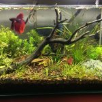: Betta fish tanks and plus what do you need for a betta fish tank and plus betta fish starter and plus contemporary fish tank