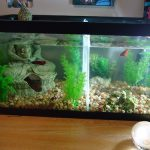 : Betta fish tanks and plus wholesale fish tanks and plus corner aquarium tanks and plus 5 gallon fish tank with filter and heater