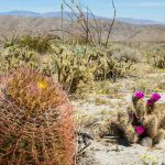 : Desert plants also best plants for arizona also flowers for desert climate also best desert flowers