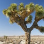 : Desert plants also desert plants and adaptations also what plants live in the desert biome