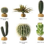 : Desert plants also desert plants and shrubs also plants grown in desert soil also plants that thrive in the desert