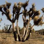 : Desert plants also desert plants information also vascular plants also list of plants that live in the desert