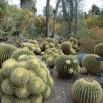 : Desert plants also desert shrubs names also spiky desert plant also plants found in hot deserts