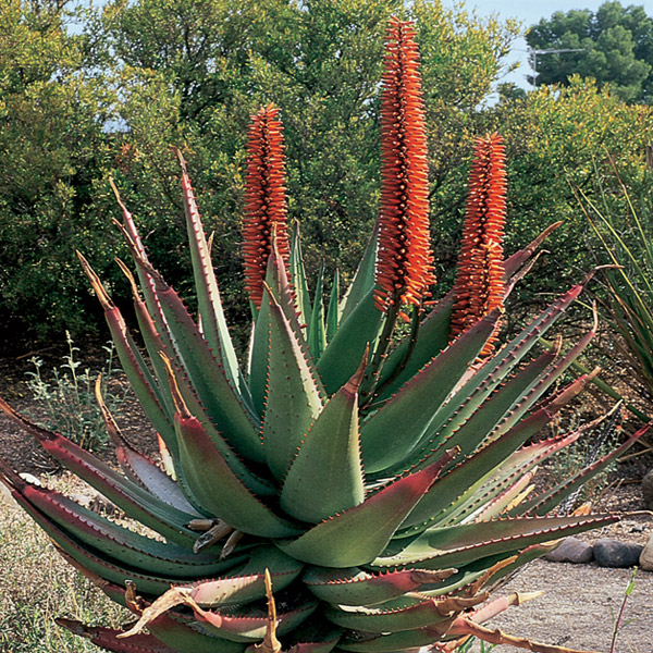 Desert plants also different plants in the desert also five desert animals also wild desert animals