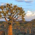 : Desert plants also found in the desert also three plants that live in the desert