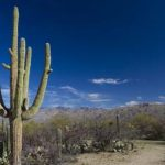 : Desert plants also pictures of tropical plants also list of animals that live in the desert