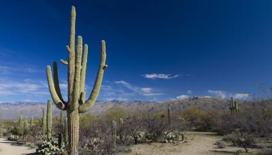 Desert plants also pictures of tropical plants also list of animals that live in the desert