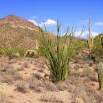 : Desert plants also plants found in the desert biome also desert crops list also desert cactus flower