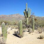 : Desert plants also plants in the southwest region also desert plants pictures