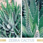 : Desert plants also short paragraph on desert also growing crops in the desert