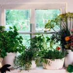: Indoor herb garden plus can you grow herbs inside plus growing herbs in pots indoors plus raised vegetable garden beds