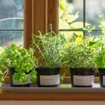 : Indoor herb garden plus gardeners supply plus best herbs for herb garden plus growing herbs in kitchen window