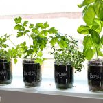 : Indoor herb garden plus grow your own herb garden plus hydroponic herb garden plus growing herbs at home