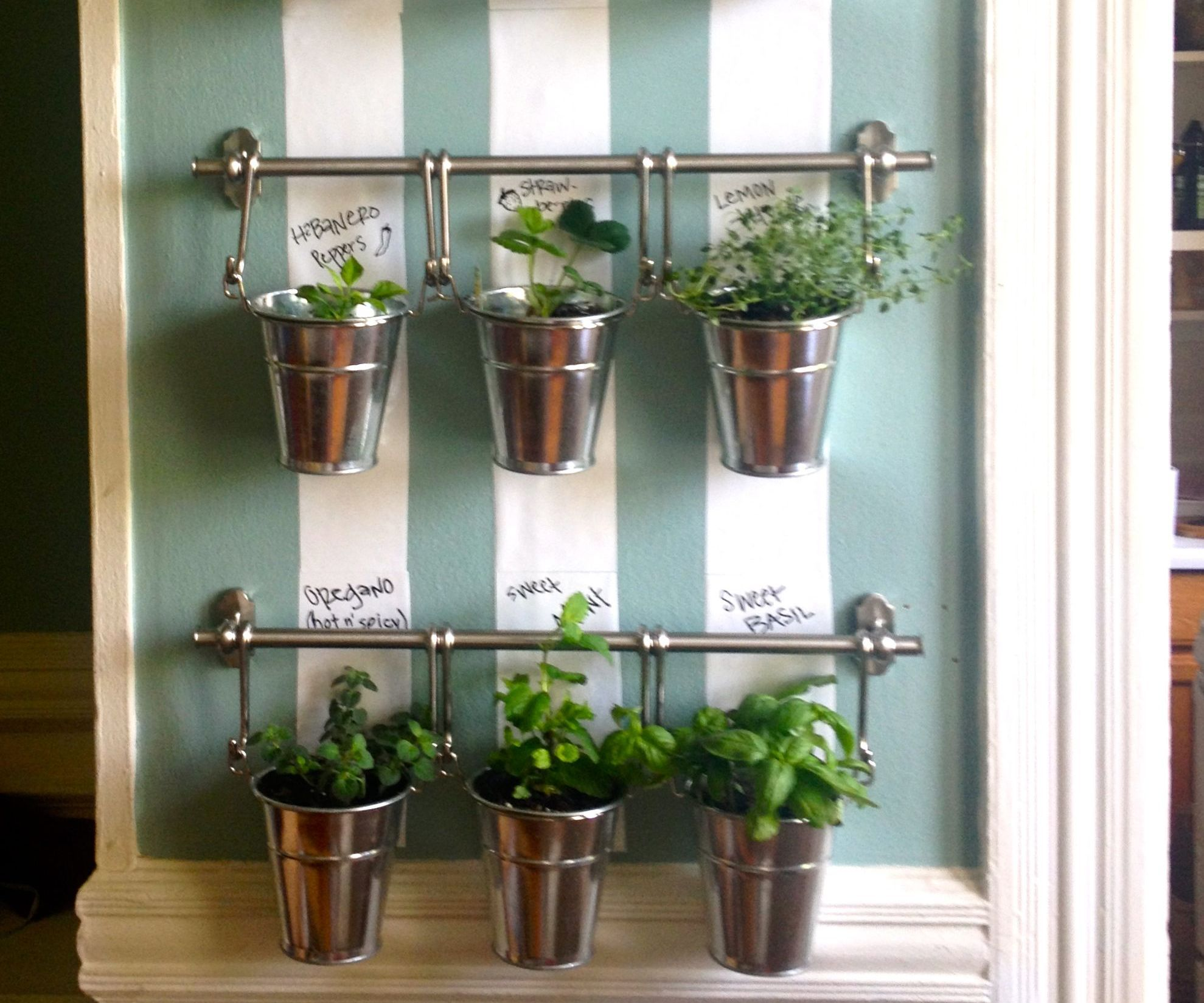 Indoor herb garden plus herbs to grow in winter plus diy hydroponics plus plant containers plus herb growing kit