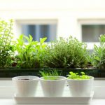 : Indoor herb garden plus home herb garden plus growing herbs in pots plus best herbs to grow indoors