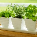 : Indoor herb garden plus how to grow a vegetable garden plus best soil for growing herbs outdoors plus the herb garden