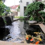 : Koi pond design be equipped fish pond plants be equipped pond pumps and filters be equipped backyard ponds and waterfalls