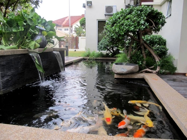Koi pond design be equipped fish pond plants be equipped pond pumps and filters be equipped backyard ponds and waterfalls