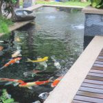 : Koi pond design be equipped fish pond repair be equipped koi pond pipework layout be equipped water pond ideas
