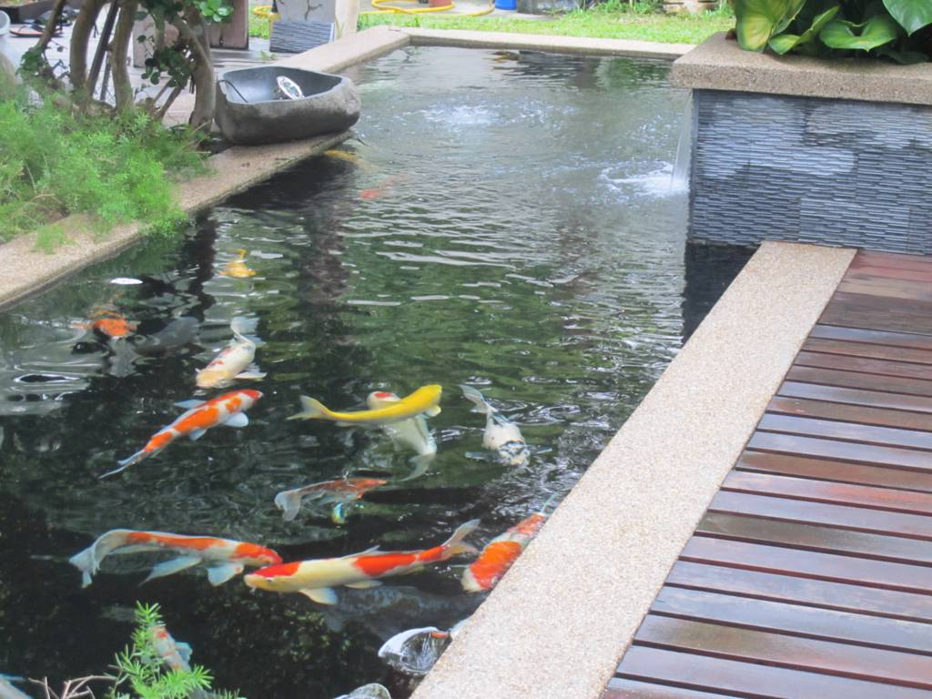 Koi pond design be equipped fish pond repair be equipped koi pond pipework layout be equipped water pond ideas