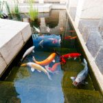 : Koi pond design be equipped house pond design be equipped rectangular koi pond be equipped diy garden pond