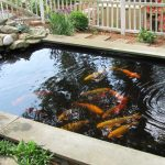 : Koi pond design be equipped koi fish breeding be equipped koi pond filter design be equipped concrete koi pond design