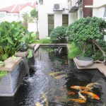 : Koi pond design be equipped koi fish pond be equipped garden pond be equipped building a koi pond
