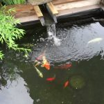 : Koi pond design be equipped modern garden pond be equipped how to make a koi pond in your backyard