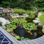 : Koi pond kits and also garden pond ideas and also raised fish pond kit and also koi pond pump and filter kits