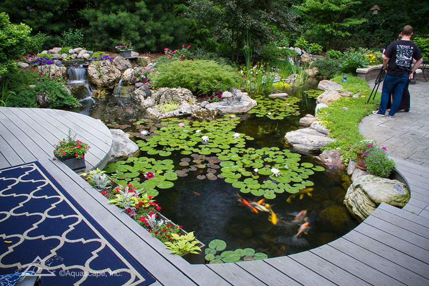Koi pond kits and also garden pond ideas and also raised fish pond kit and also koi pond pump and filter kits