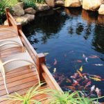 : Koi pond kits and also garden pond kit and also pond kits for sale and also outdoor pond kits