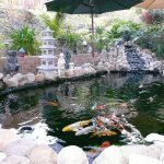 : Koi pond kits and also koi pond fountain and also large garden pond and also backyard fountain ponds