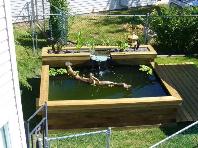 Koi pond kits and also koi supplies and also making a fish pond and also corner pond kit and also small pond pump kit