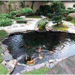 : Koi pond kits and also preformed pond kits and also koi fish pond kits and also coy pond kit