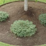 : Landscape edging also lawn edging also garden borders also landscape borders