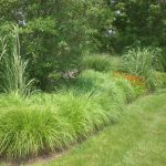 : Landscape grasses plu can ornamental grasses grow in shade plu japanese landscape plu ornamental clump grasses