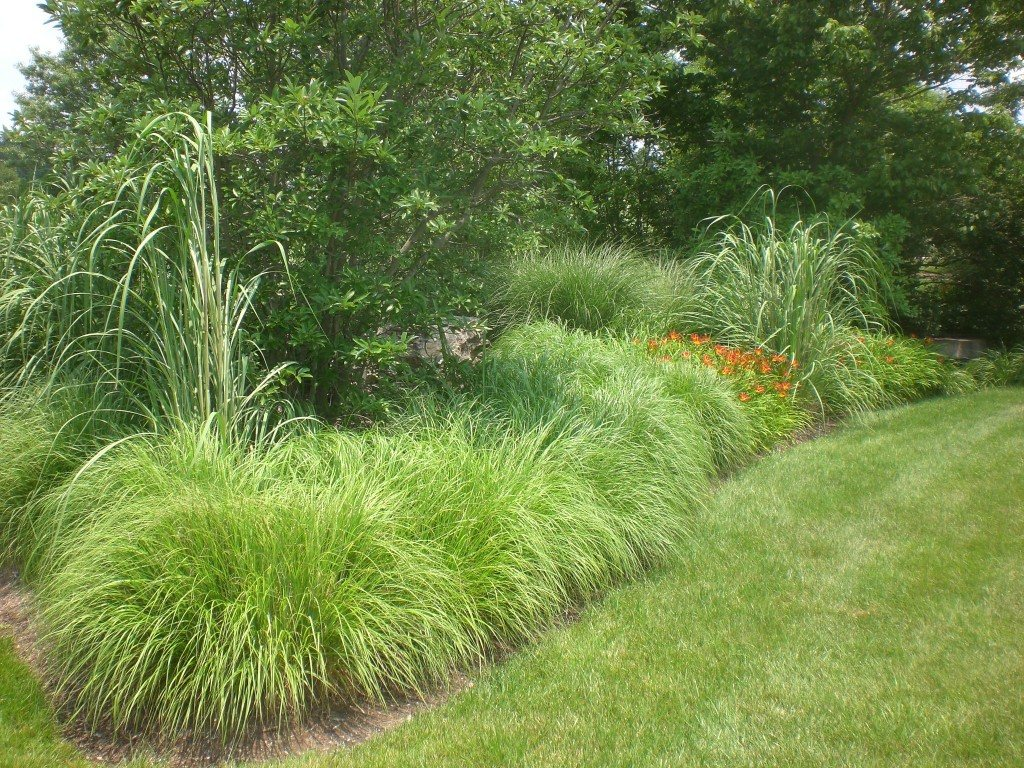 Landscape grasses plu can ornamental grasses grow in shade plu japanese landscape plu ornamental clump grasses