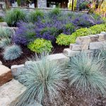 : Landscape grasses plu landscape design plu kinds of ornamental grasses plu different kinds of ornamental grasses