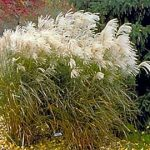 : Landscape grasses plu sun loving ornamental grasses plu grass garden plants plu landscaping grasses varieties