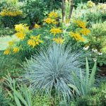 : Landscape grasses plus big grass plant plus tall grasses for containers plus outdoor ornamental grasses