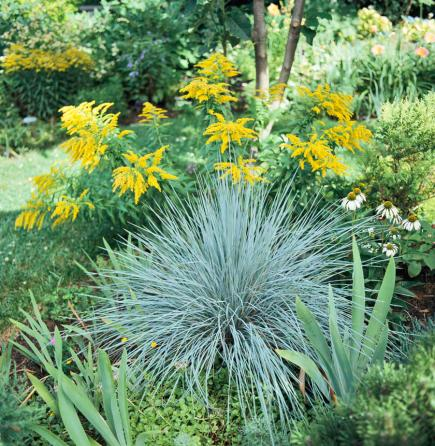Landscape grasses plus big grass plant plus tall grasses for containers plus outdoor ornamental grasses