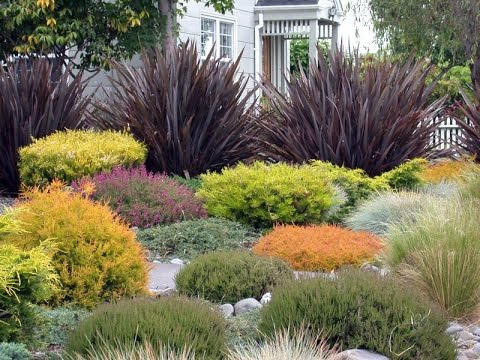Landscape grasses plus outdoor tall grass plants plus small ornamental grasses for landscaping