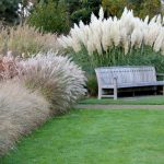 : Landscape grasses plus tall variegated ornamental grasses plus japanese ornamental grass plus tall grass plants for sale