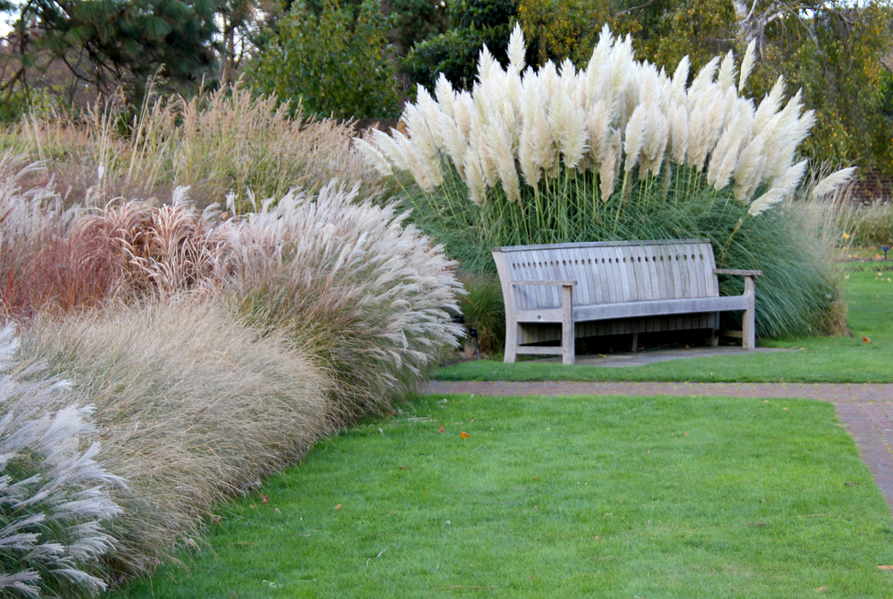 Landscape grasses plus tall variegated ornamental grasses plus japanese ornamental grass plus tall grass plants for sale