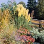 : Landscape grasses you can look best ornamental grasses you can look large ornamental grasses