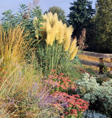 Landscape grasses you can look best ornamental grasses you can look large ornamental grasses