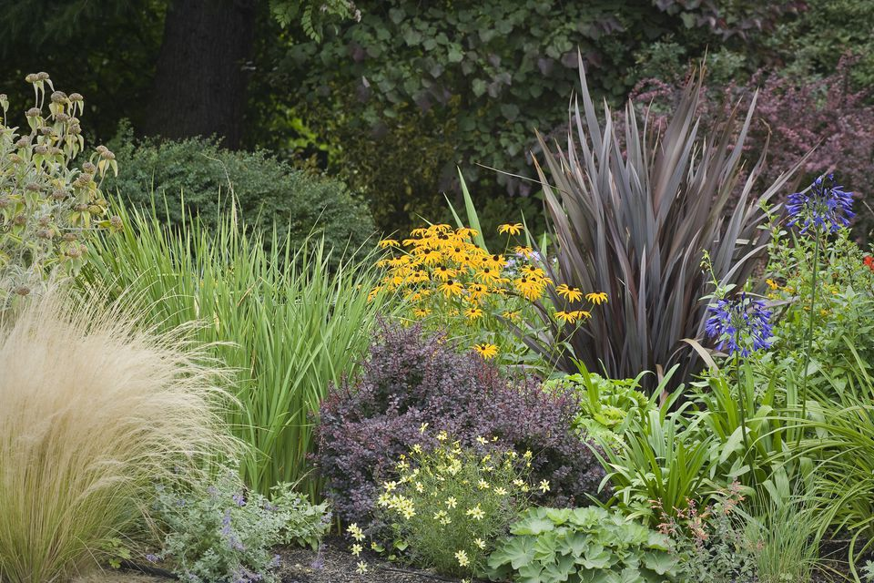Landscape grasses you can look decorative grasses you can look fountain grass you can look pampas grass