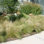 : Landscape grasses you can look oriental grass you can look ornamental grass varieties you can look tall decorative grass